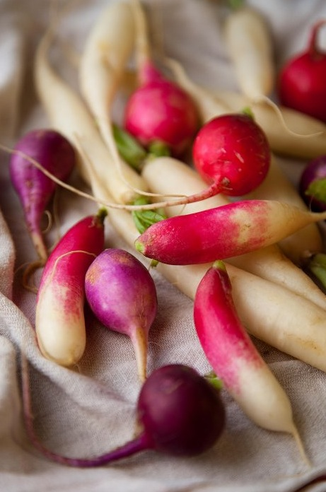 Radishes-from-designsponge